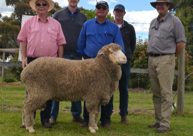 Top priced ram at 2016 on property auction, sold for $10,000 to Victor and Harry Stonnill,