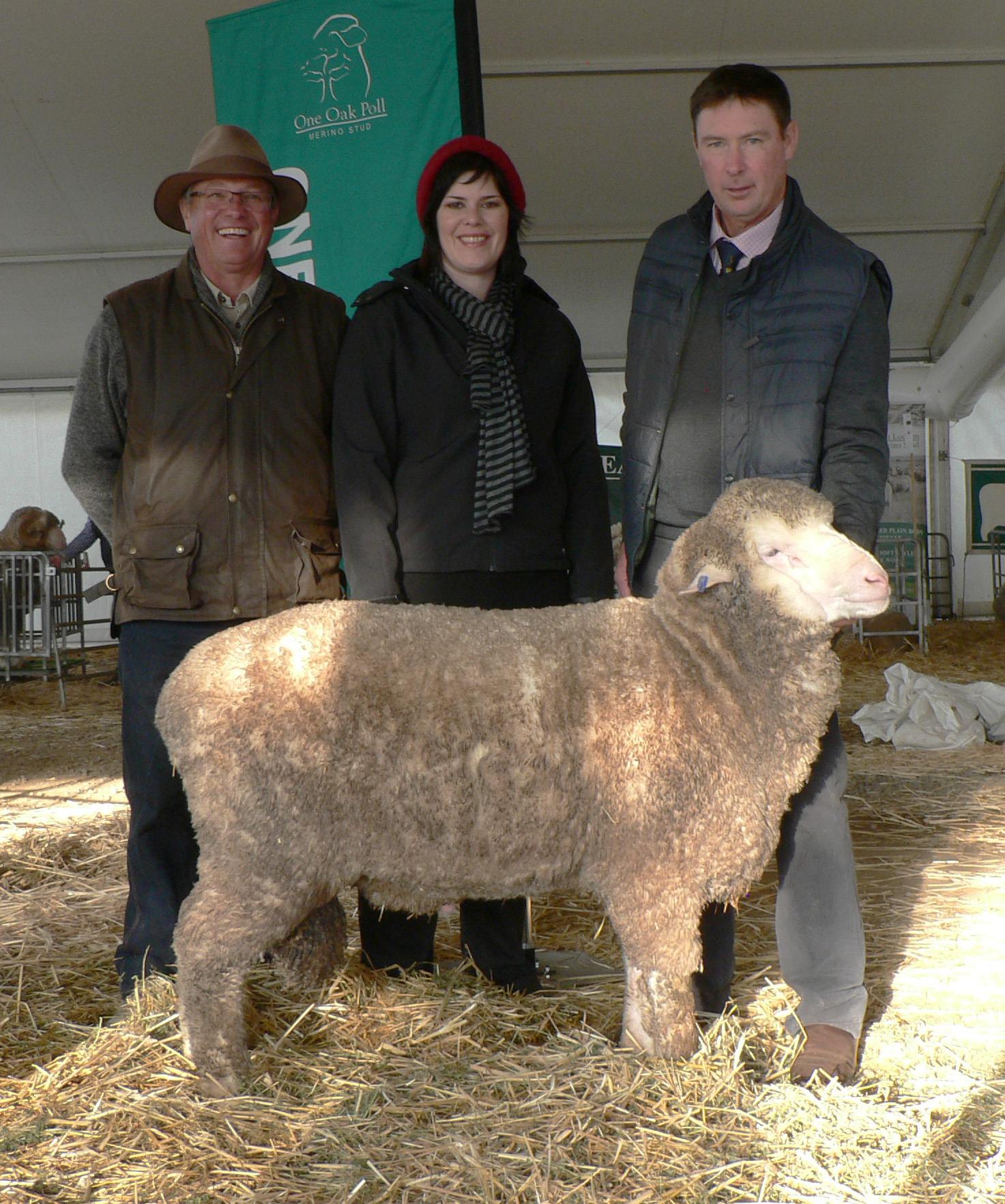 "B-13014 bendigo sold privately to the Brady family, ""Stavely Park"" Vic for $10,000 at Bendigo Sheep Show in 2014"
