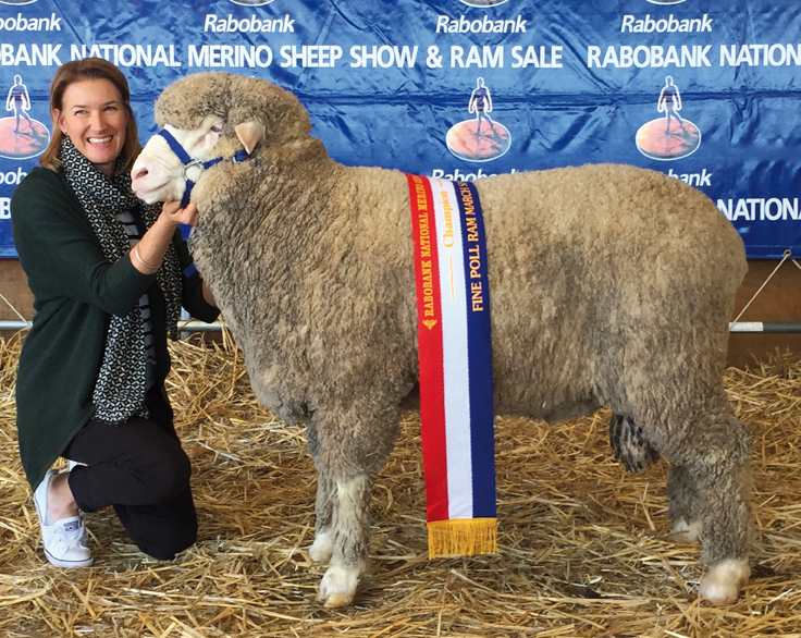 Champion March Shorn Fine Wool Poll Ram, Dubbo National Show and Sale, 2017