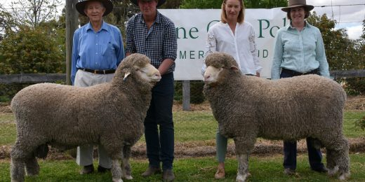 Dick and Caroline Gavel, Gulgo, Condobolin purchased the top priced ram, Lot.1 for $9500