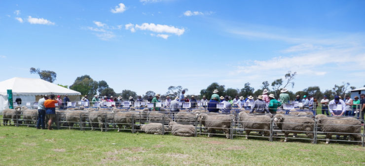 2018 on-property auction - sale rams