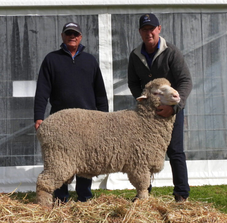 One Oak Poll sire O-18036 sold fro $10,000 to South austrlalian stud, Andoma