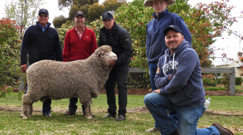 Top priced ram sold to Geoff Longmire for $15,000 at One Oak Poll's 2020 on-property auction
