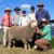 R19137 (by Red-31)with Nick Gray, Elders Jerilderie;Rodger Mattews, Borambil Merini Stud, Lachlan, Amelia, and Alistair Wells with Rick Power from Nutrien